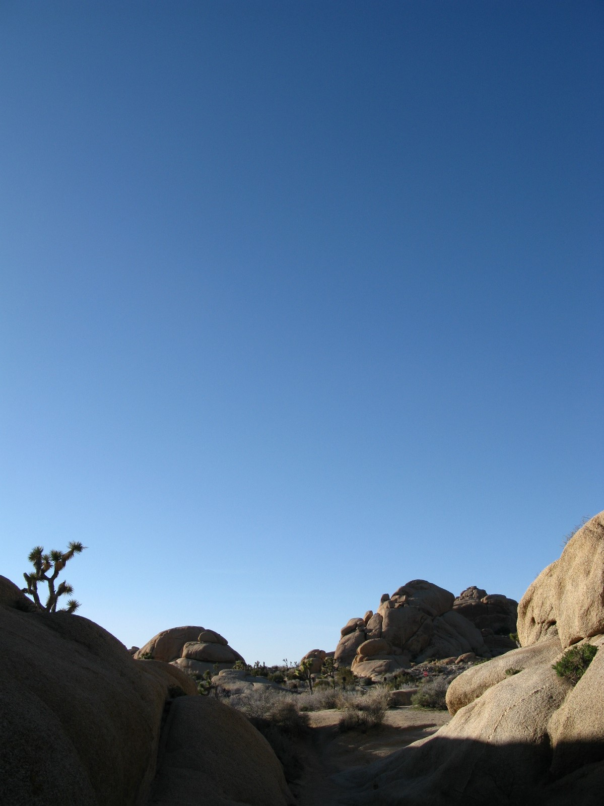 Photograph by the author. Barren grey rocks stand in heaps amidst desert scrub. A prickled Joshua tree twists its arms upwards on the left. Vaulting far, far above the desert vaults a clear sky in infinite shades of blue.